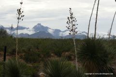 Chiricahua Mts.
