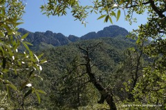 Santa Rita Mts.
