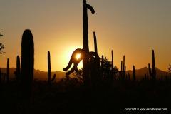 Saguaro N.P.