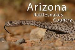 Arizona 2019