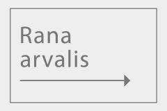 Rana arvalis