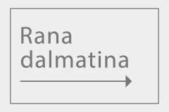 Rana dalmatina