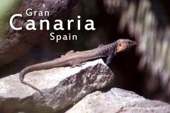 Gran Canaria 2005
