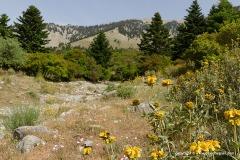 Near Feneos Valley