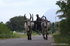 Near Anamalai Mts