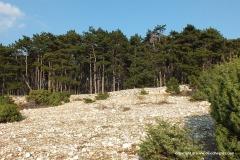 Near Veli Vrh