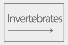 Invertebrates