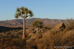 North of Springbok
