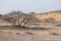 Near Berbera