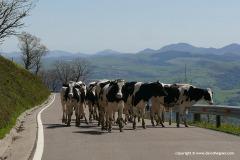 SW Pyrenees