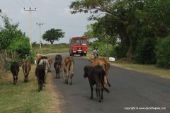 Near Tissamaharama